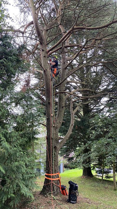 Tree Surgeon Devon